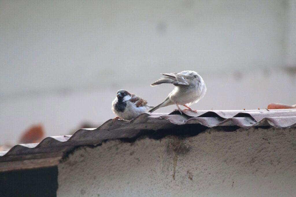 Bird excrement